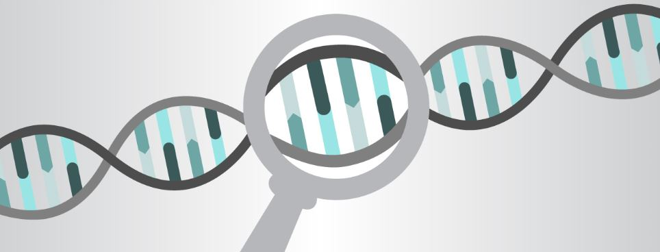 dna magnifying glass