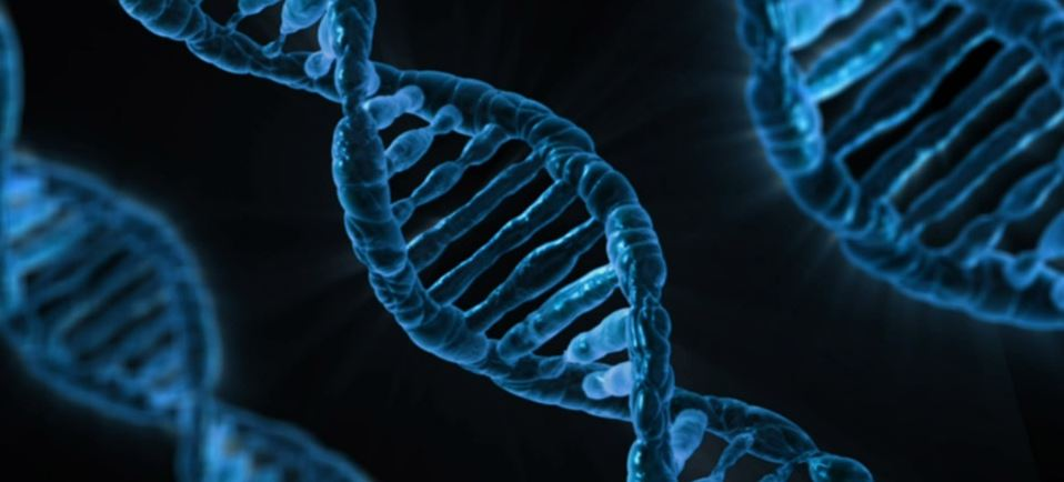 An Easy Guide to Commercial Genealogical DNA Tests